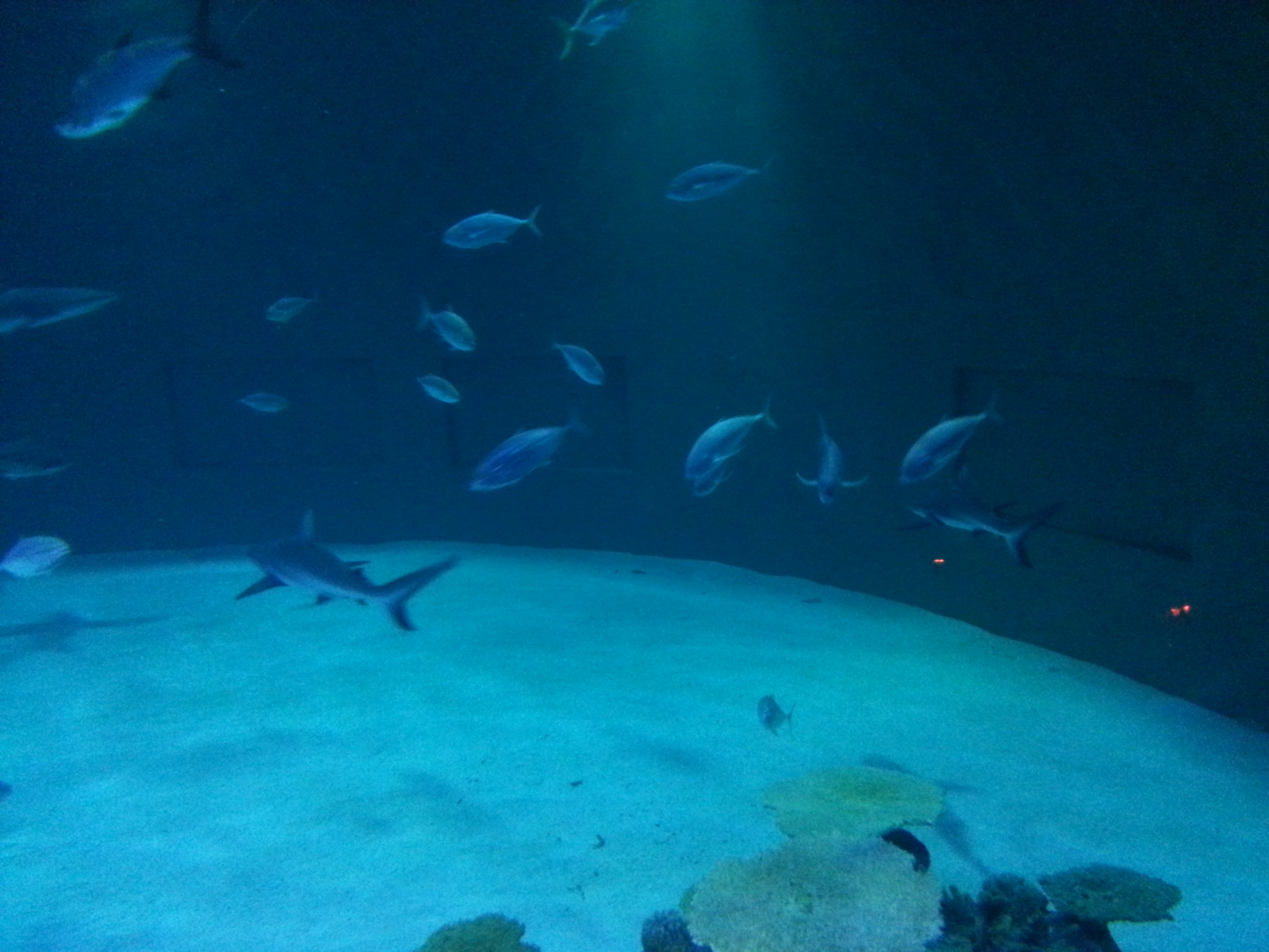 Shark Reef, Mandelay Bay