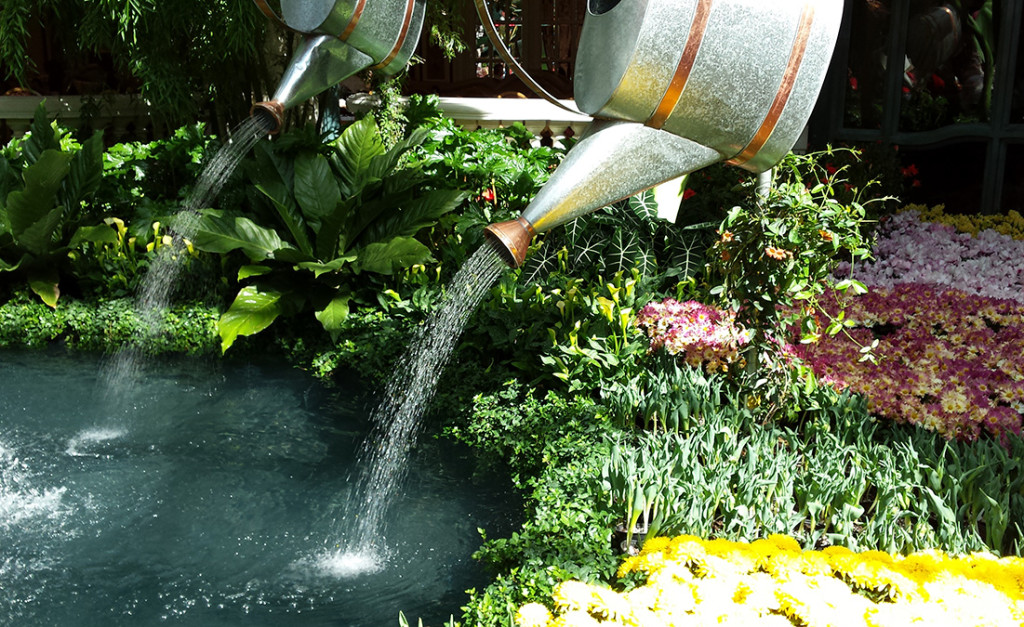 Watering Cans, Bellagio Conservatory