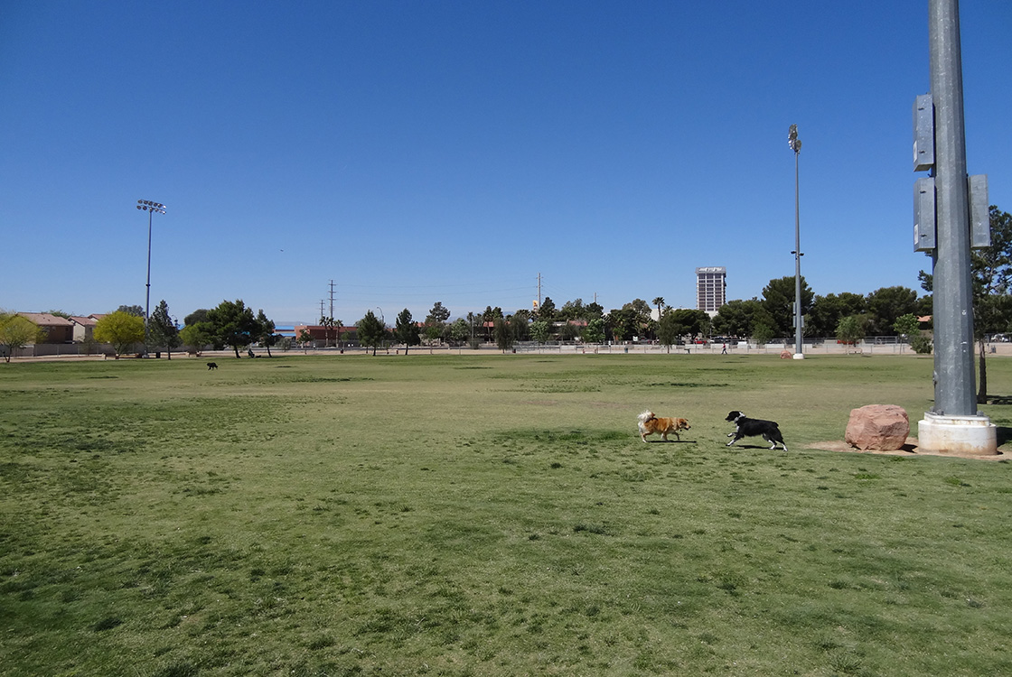 Dog Fanciers Park, Dogs Running & Playing, Las Vegas Eastside