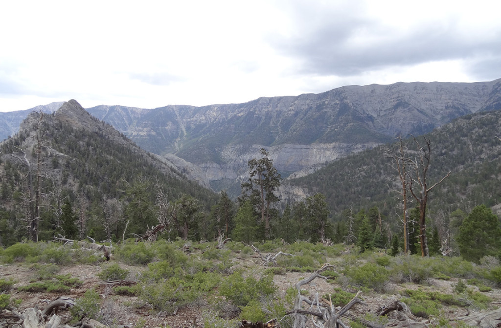 View of Spring Mountains from Trail Canyon, Mt Charleston Area NV