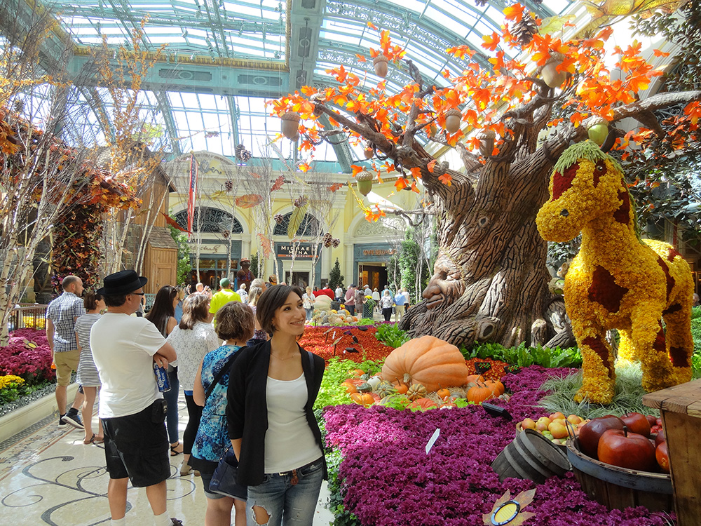 Bellagio Conservatory, Botanical Gardens Autumn Harvest, 2014 Las Vegas