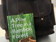 Amazon New Release Best-Seller, A Pine Tree in a Bamboo Forest