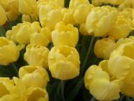 Bellagio Conservatory & Botanical Gardens – Spring Celebration 2013